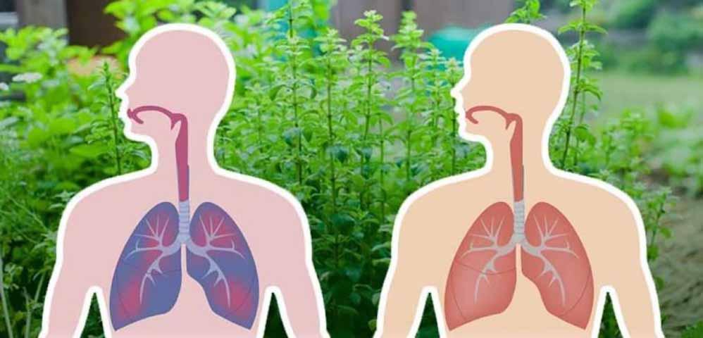 7 трав, которые убивают вирусы и слизь в ваших легких!