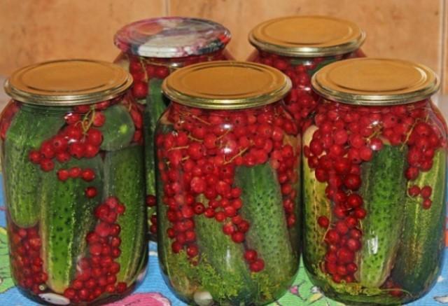 Аппетитные огурцы с красной смородиной — это мой самый любимый рецепт огурцов! Съедаем их первыми или оставляем на большие праздники.